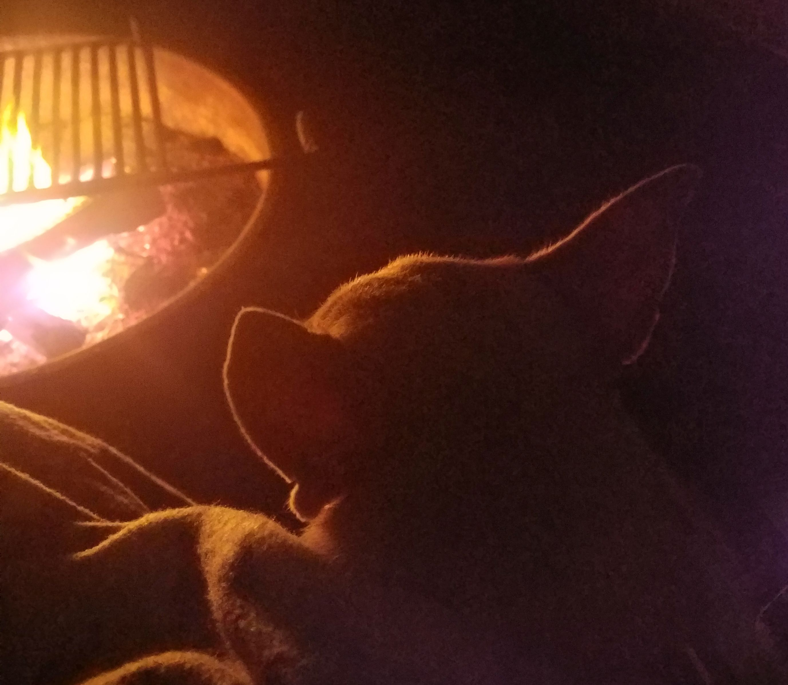 Peanut snuggling with mama by the campfire